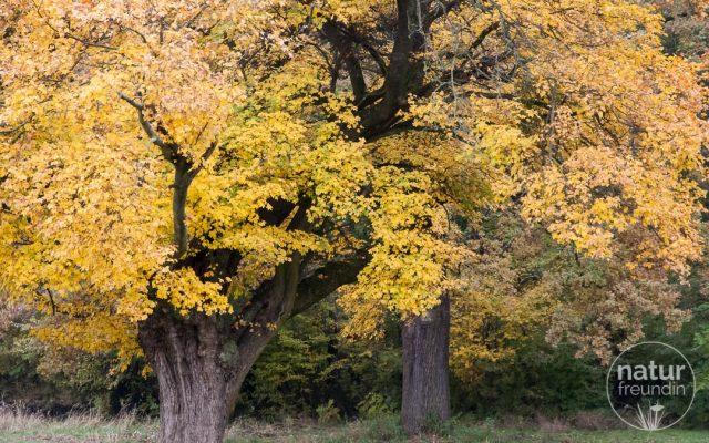 Herbst im Nationalpark: Goldene Bäume