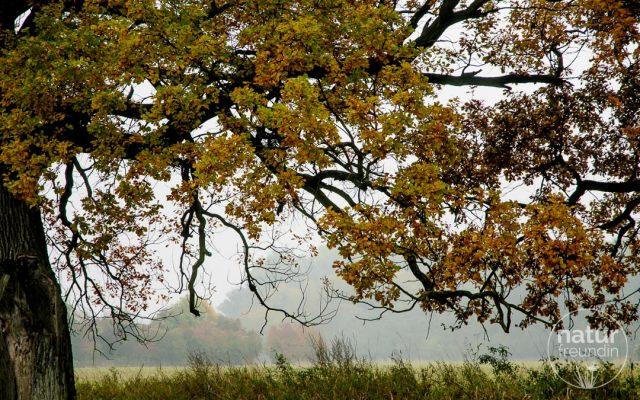 Herbst in den schönsten Farben im Nationalpark Donauauen