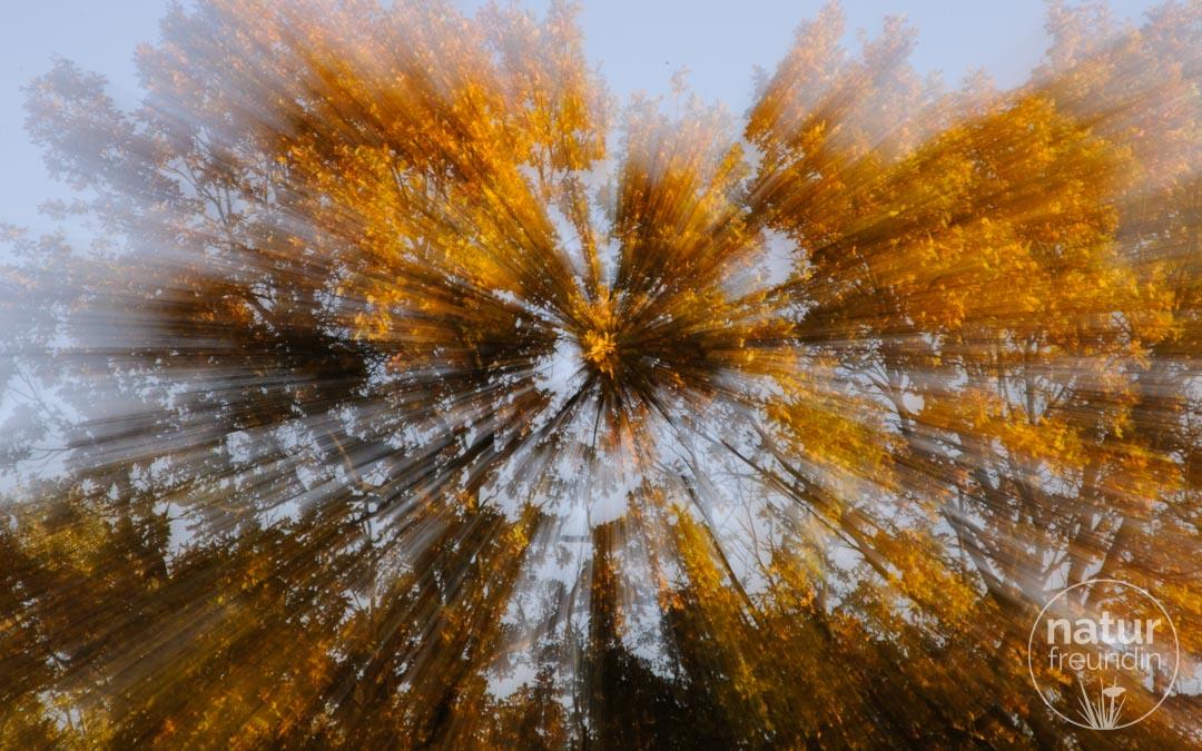 Herbststimmung, gezoomt