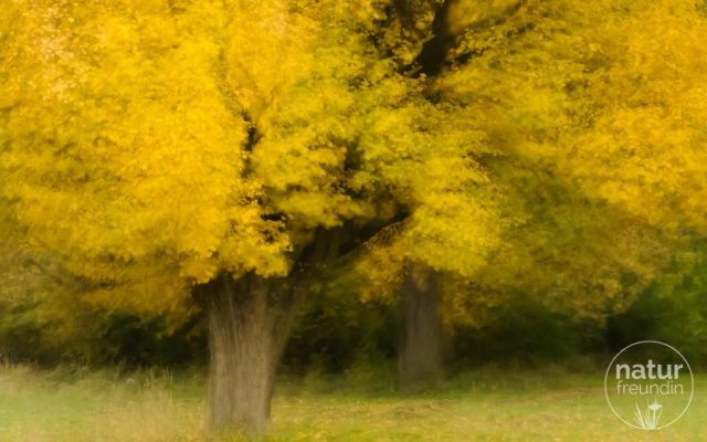Kreative Herbstbäume
