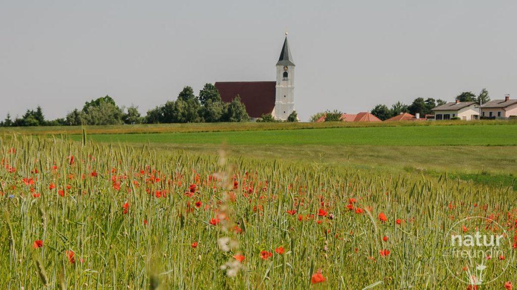 Kloster Pernegg im Frühling