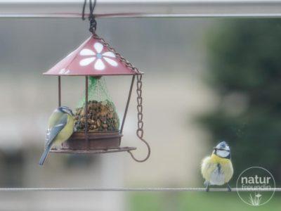 Besuch am Vogelhäuschen