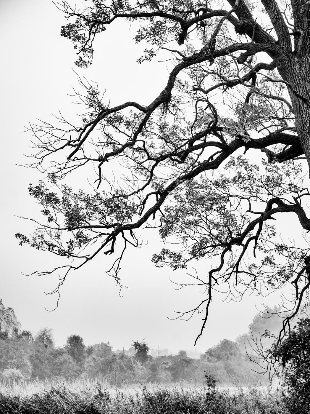 Herbst schwarz weiß