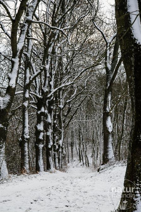 Winterlicher Weg der Stille
