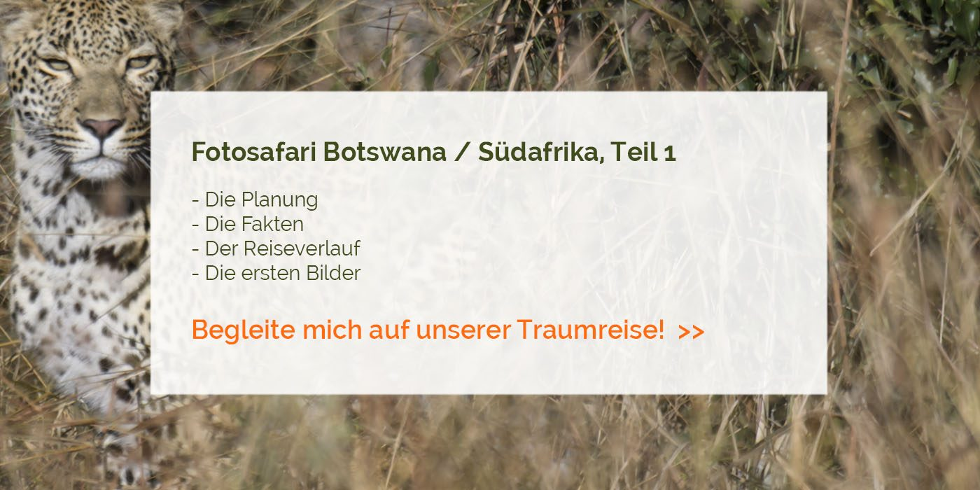 Fotosafari Botswana / Südafrika, 1. Teil