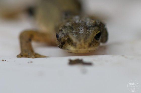 Amphibienschutzprojekt – 80 Amphibien geschützt!