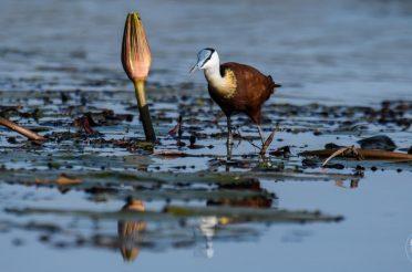Reisebericht Botswana – Safari zu Wasser und Land in Chobe