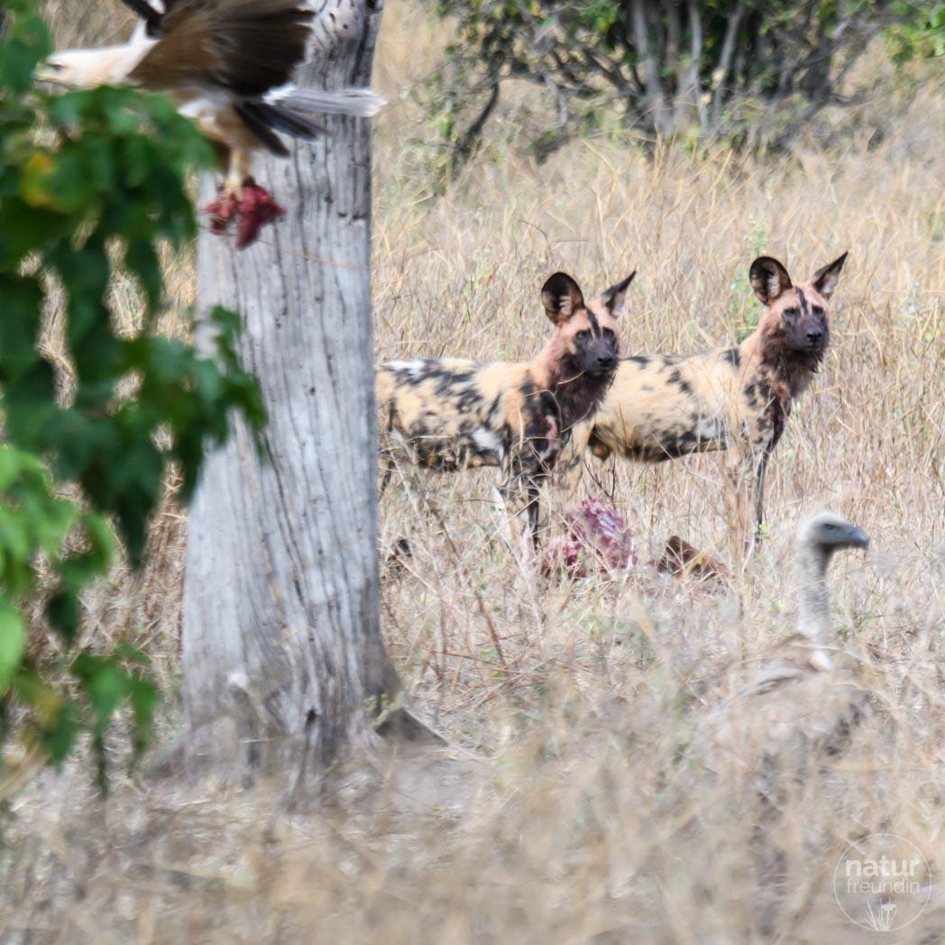 Reisebericht Botswana - Safari zu Wasser und Land in Chobe   naturfreundin.AT