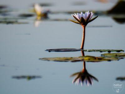 im Okavangodelta