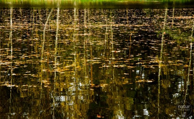 Herbst im Wasser