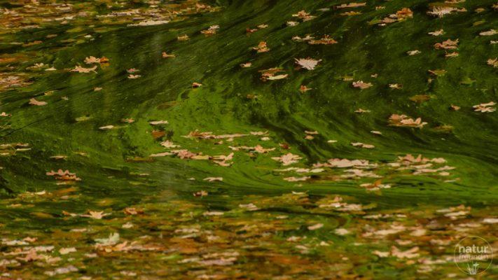 Blätterstrudel