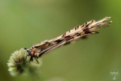 Kategorie Insekten & Spinnentiere
