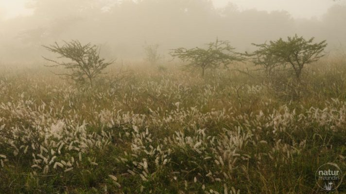 Nebel in Phinda