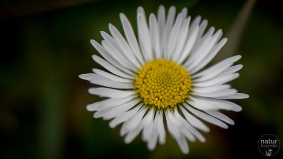 Wildkräuter – Frühjahrsputz für den Körper