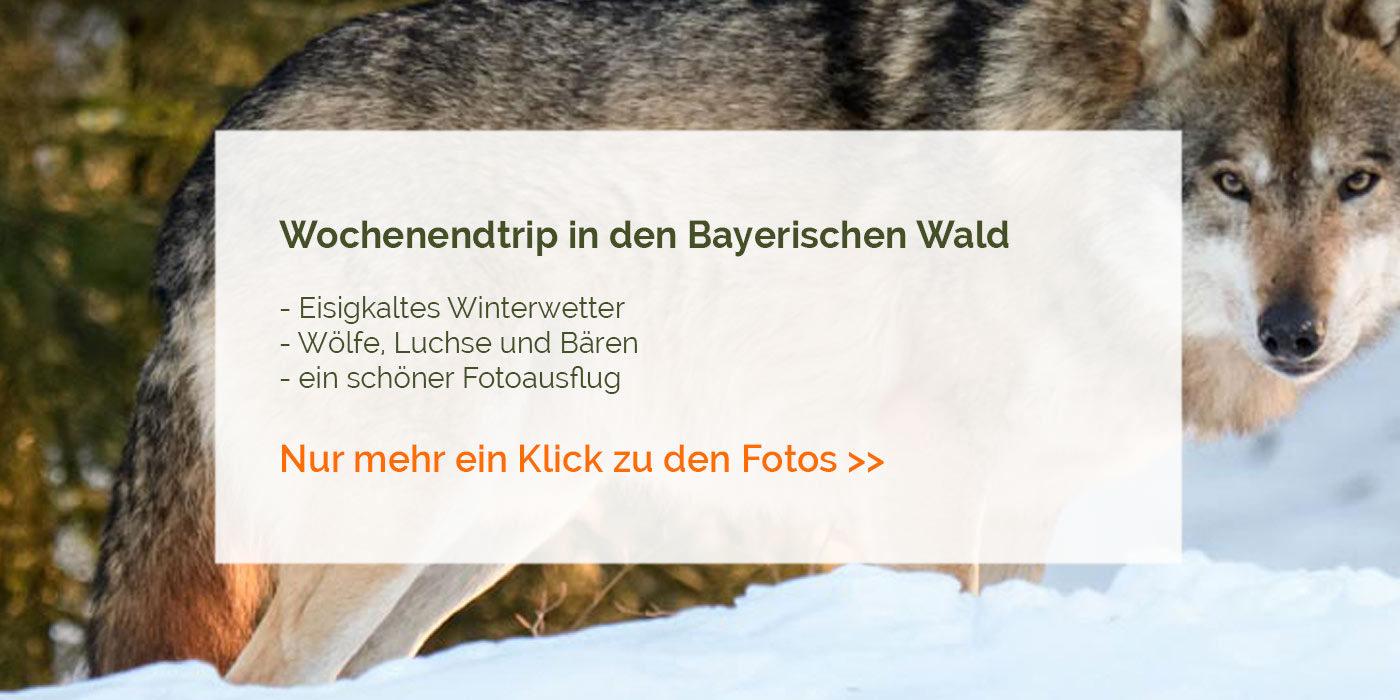 Wochenendtrip Bayerischer Wald