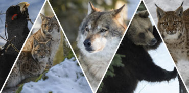 Tierfotografie im Nationalpark Bayerischer Wald