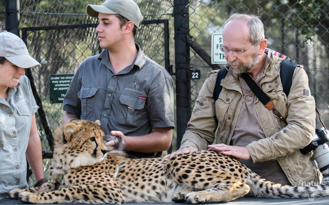 Erich hatte die ganze Aufmerksamkeit der Gepardin, als er sie streichelte. Gefährlich ist das allerdings nicht - dafür sorgen Leckerlis.
