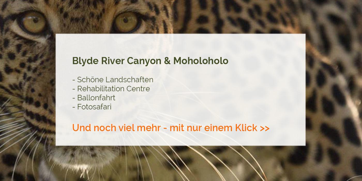 Blyde River & Moholoholo