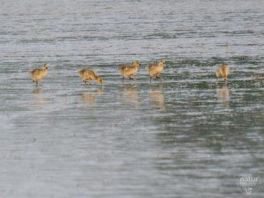 Kurzes VTNÖ Treffen im Nationalpark Neusiedler See
