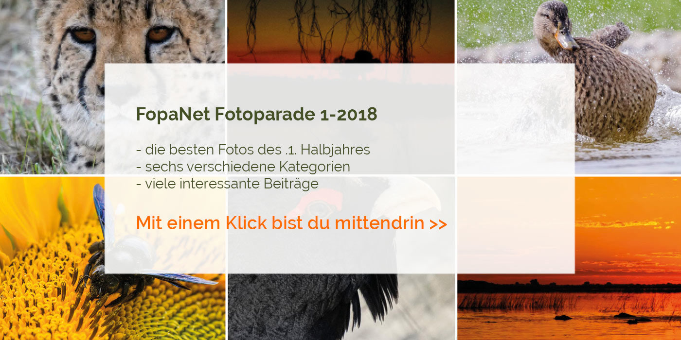 FopaNet 1-2018