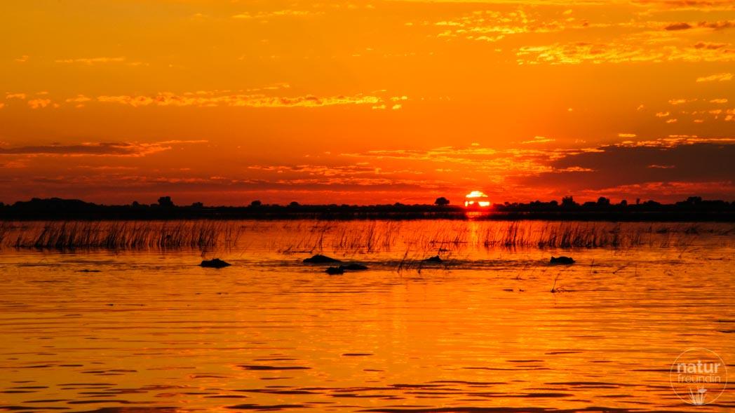 Sonnenuntergang mit Nilpferden