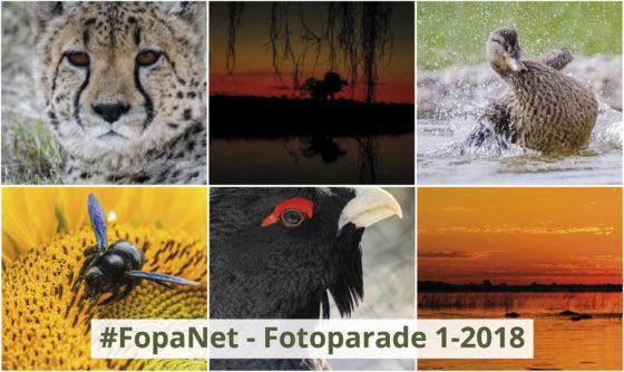 FopaNet – das 1. Halbjahr 2018 in Bildern