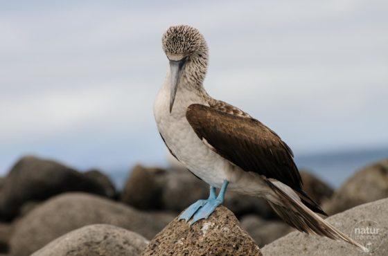 Galapagos – ein außergewöhnliches Reiseziel für Naturliebhaber