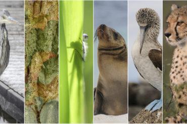 Naturfotografie – Hobby, Spannung und Entspannung