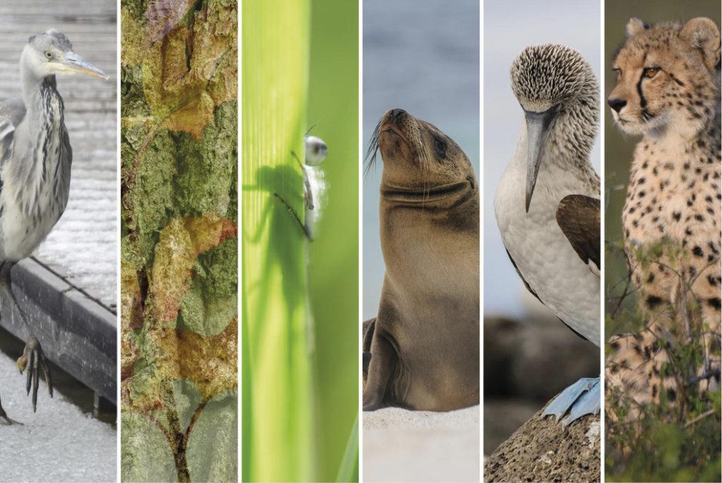 Titelbild Naturfotografie