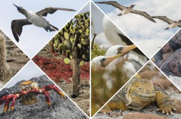 Traumreise: 6 Tage Kreuzfahrt auf den Galapagosinseln