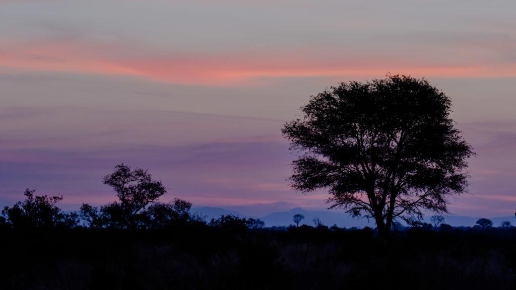 Sonnenuntergang in Sabi Sabi