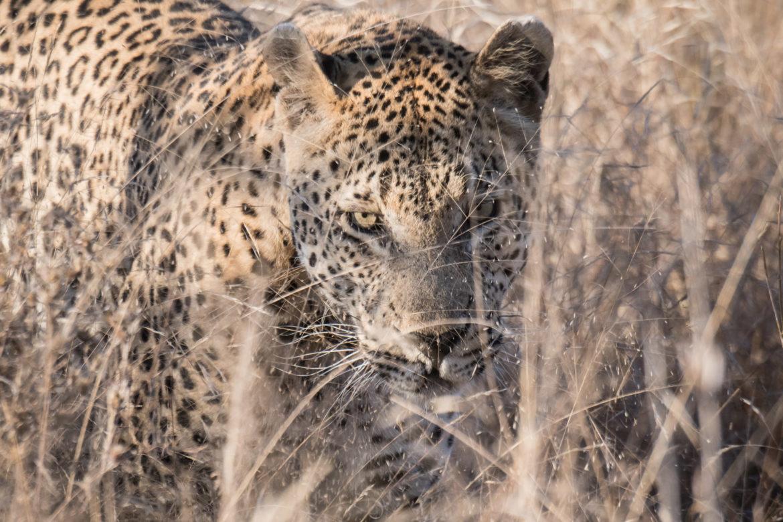 Sabi Sabi – ein perfektes Reiseziel für Naturfotografie