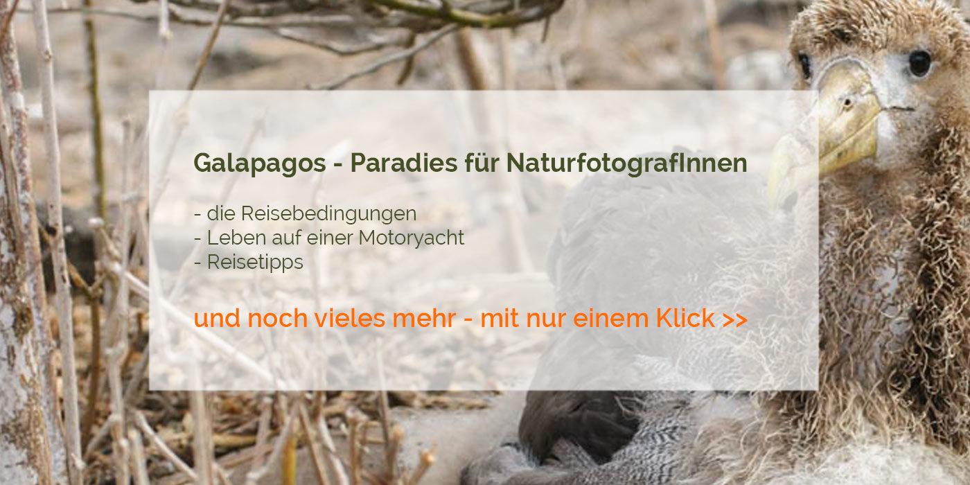 Galapagos Reisebericht
