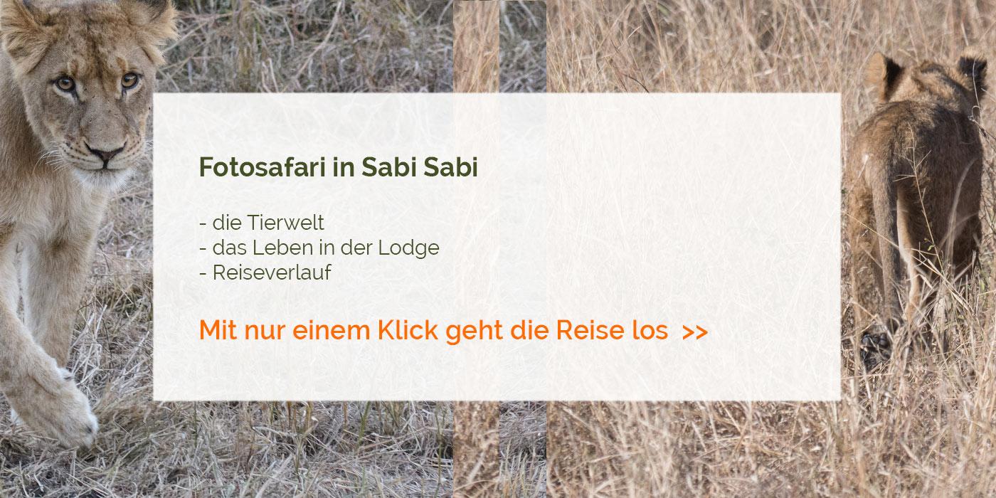 Sabi Sabi