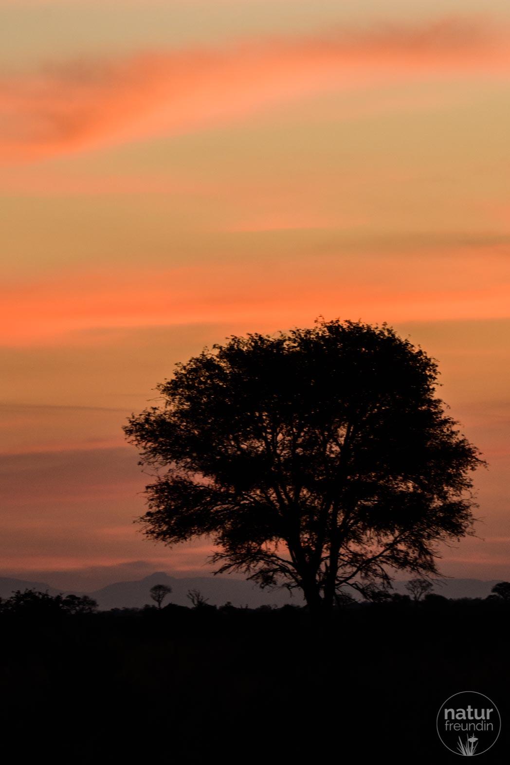 Sonnenuntergang Sabi Sabi