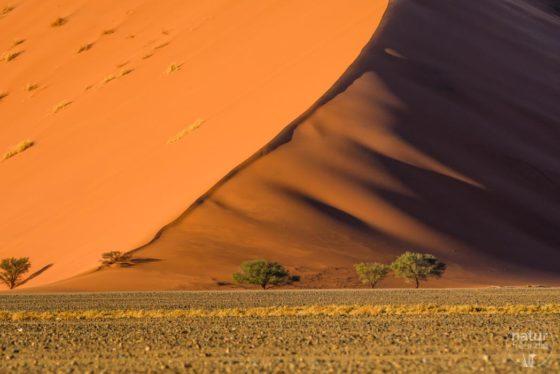 Naturfotografie in Namibia – Unsere Reise im Überblick