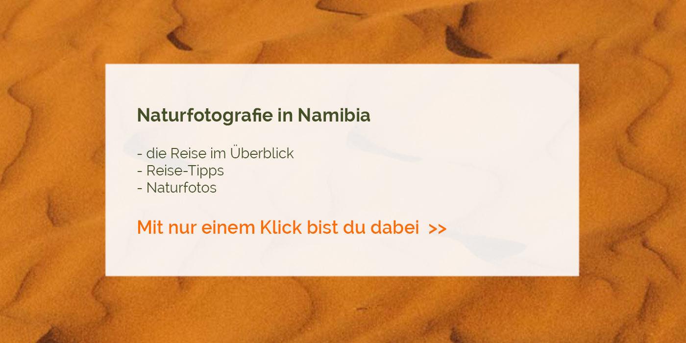 Naturfotografie in Namibia