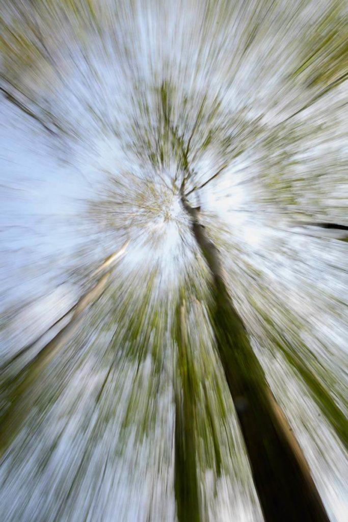 Zoom in die Baumkronen