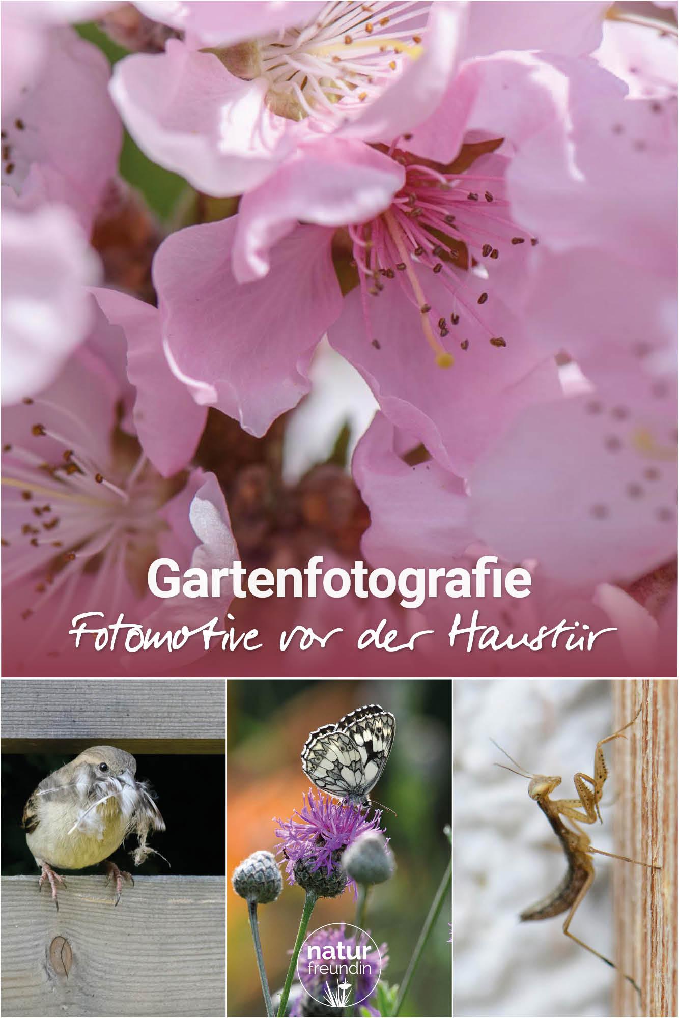 Gartenfotografie - Fotomotive vor der Haustür