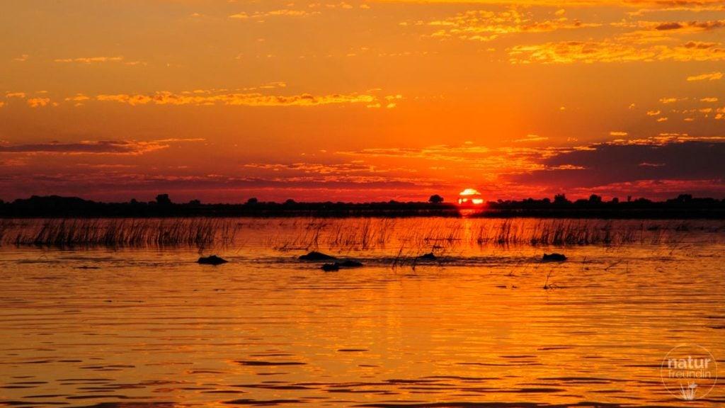 Sonnenuntergang am Chobe-River