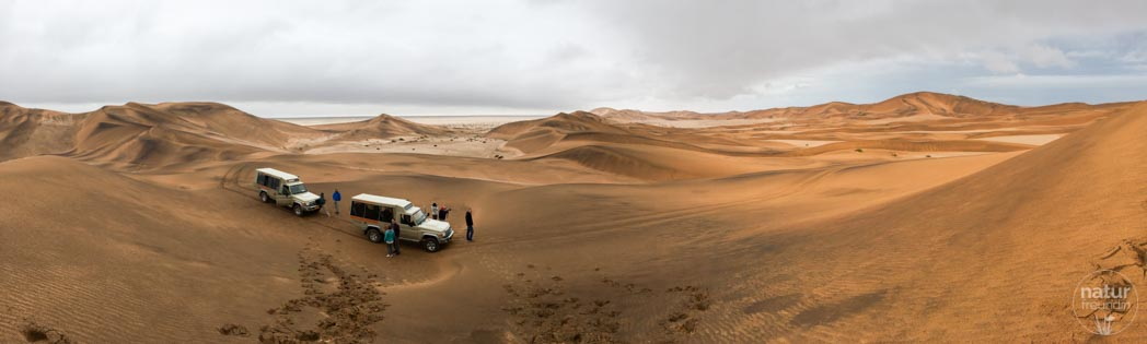 Namib nach dem Regen