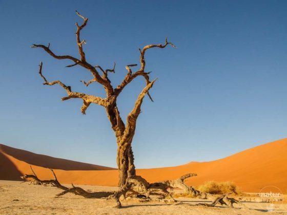 Sossusvlei, Dead Vlei und viele Naturfotos