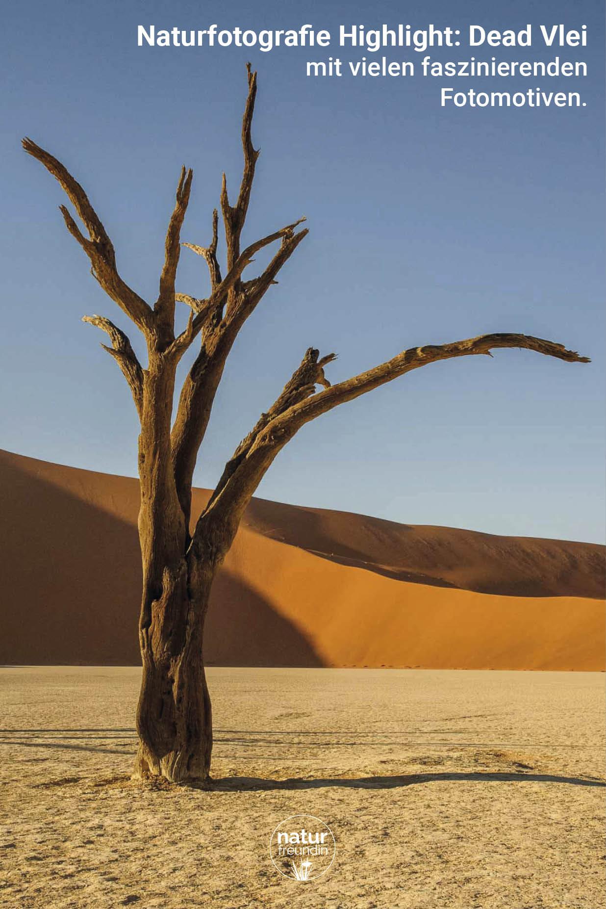 Deadvlei - Naturfotografie vom Feinsten