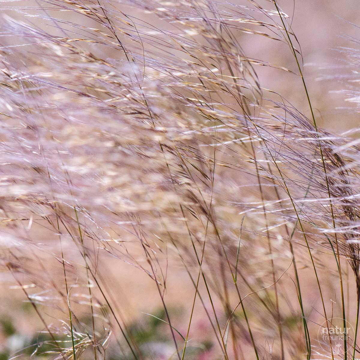 Solitaire, Gräser
