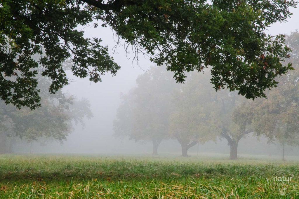 Nebel im Marchfeld
