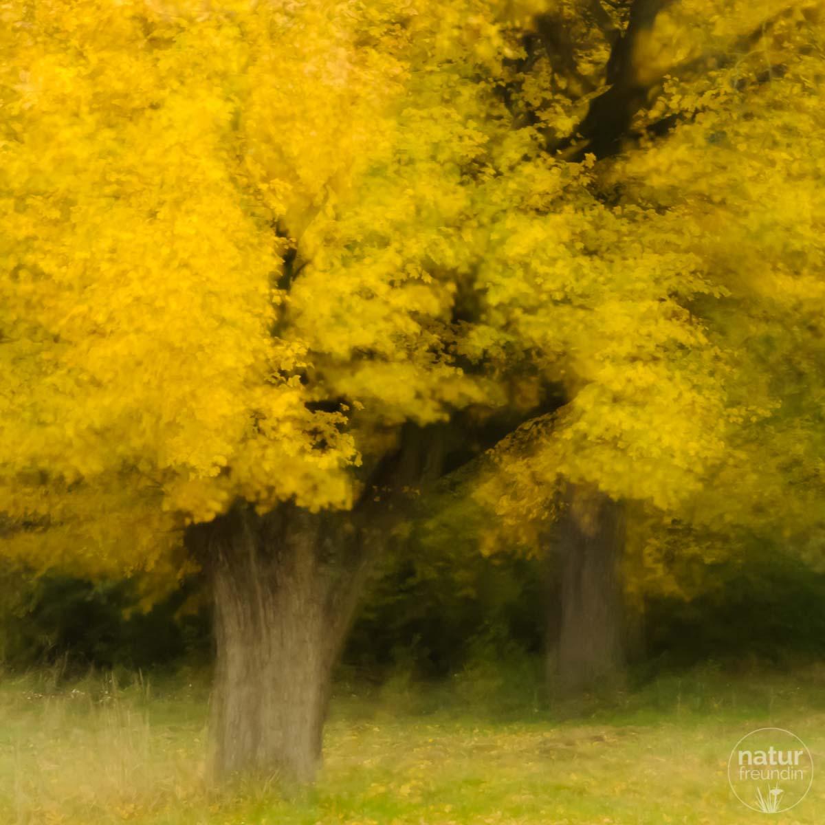 Herbsteiche, doppelt belichtet