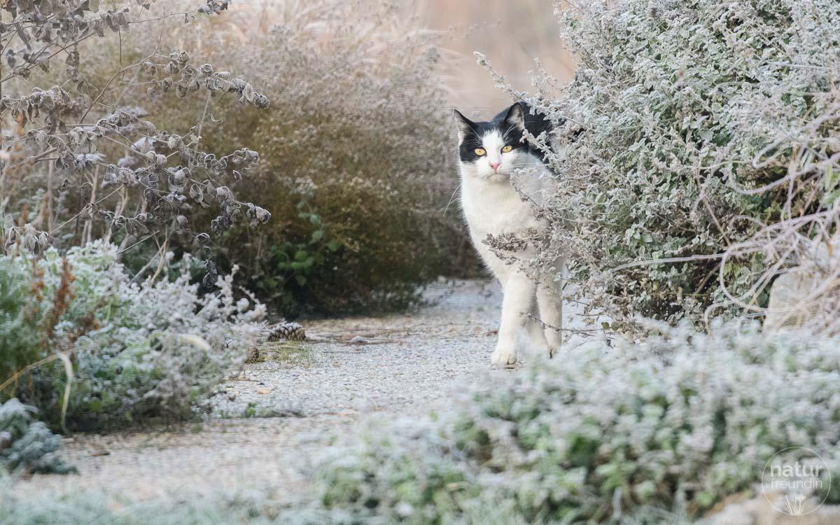 Katze im Wintergarten
