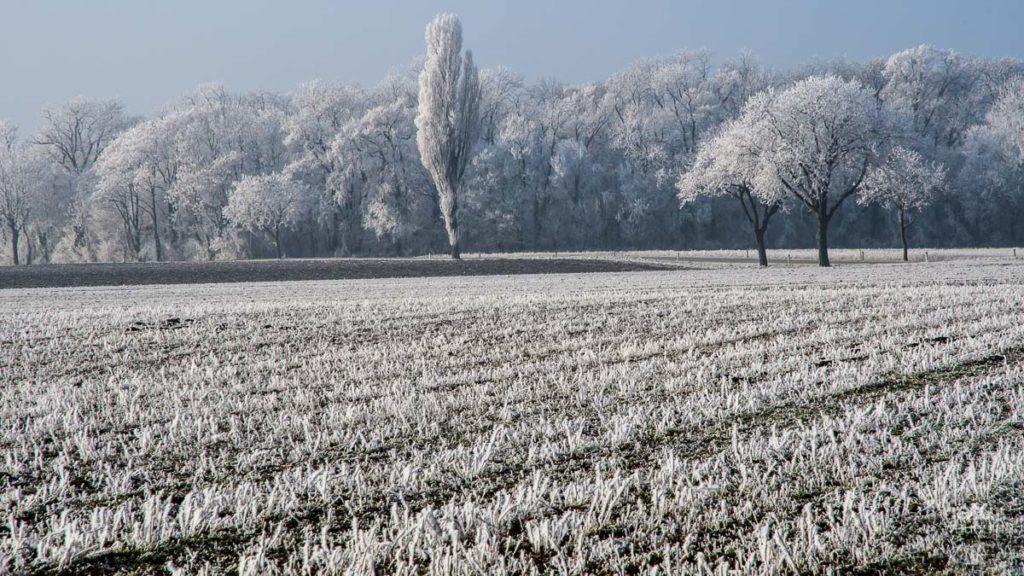 Marchfeld im Winter - an einem der seltenen helleren Tage