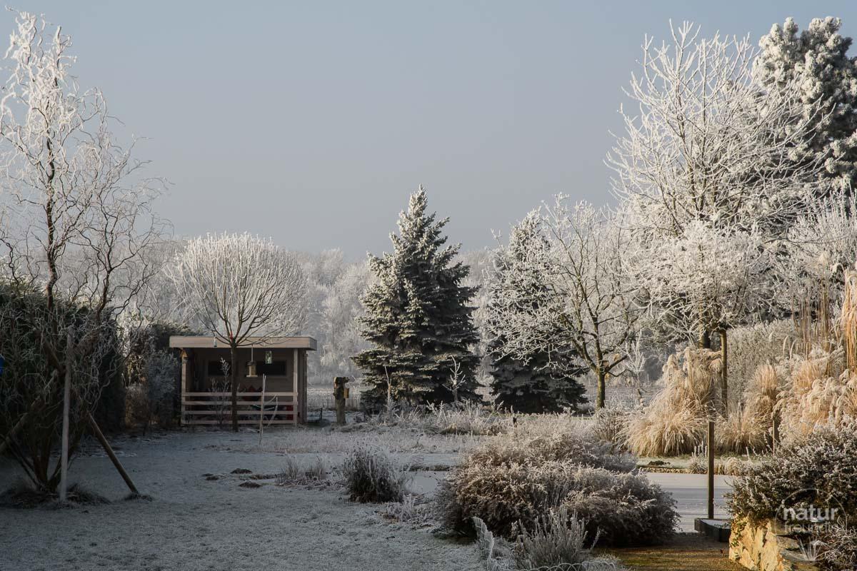 Winter im Naturgarten