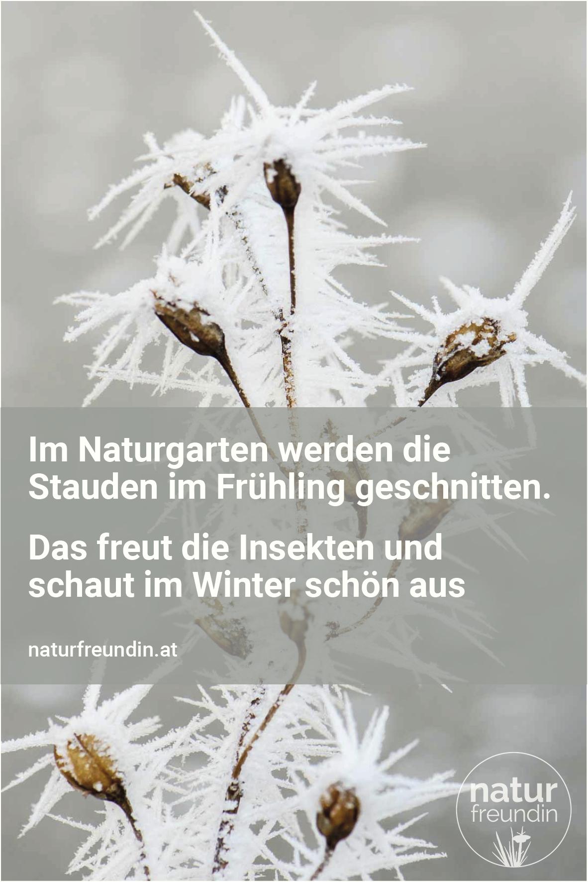 Naturgarten im Winter - Stauden werden erst im Frühling geschnitten.